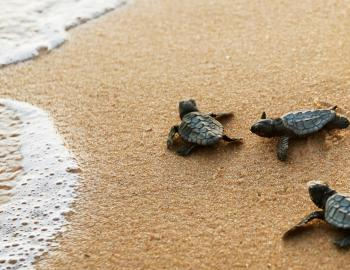Turtle Trek 5K