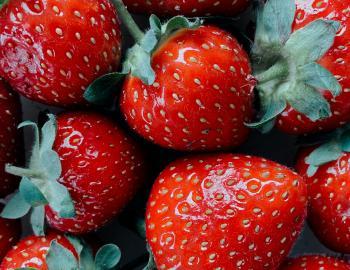 Lowcountry Strawberry Festival